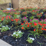Close up photo of red, white, and pink flower beds